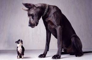 large-dogs-die-young-620